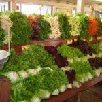 Somis-FarmMarket