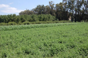 Crops In The Field Underwood Farms