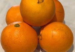 navel-oranges
