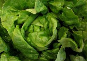 vbutter_lettuce