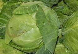 vgreen_cabbage