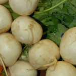 vjapanese_turnips